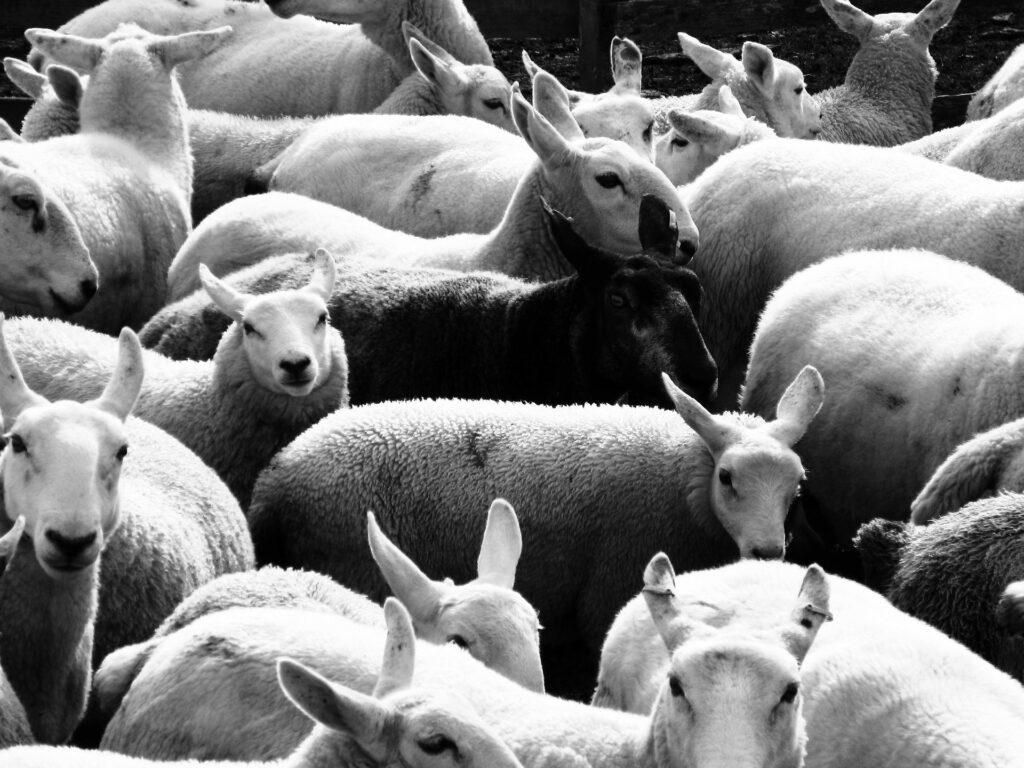Mit diesen 5 Tipps schwarze Schafe unter den Personaldienstleistern identifizieren